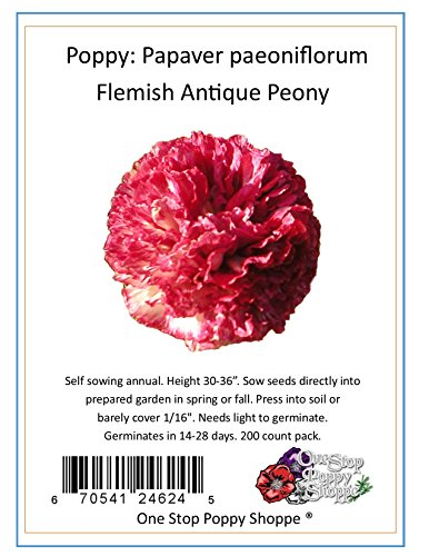 200 Poppy Flower Seeds. Flemish Antique Poppies. One Stop Poppy Shoppe® Brand.