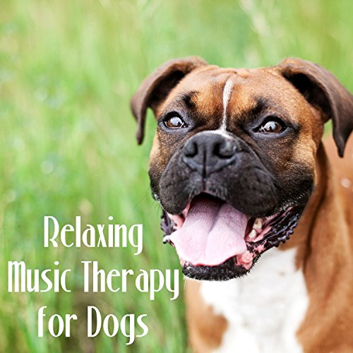 Relaxing Music Therapy for Dog...