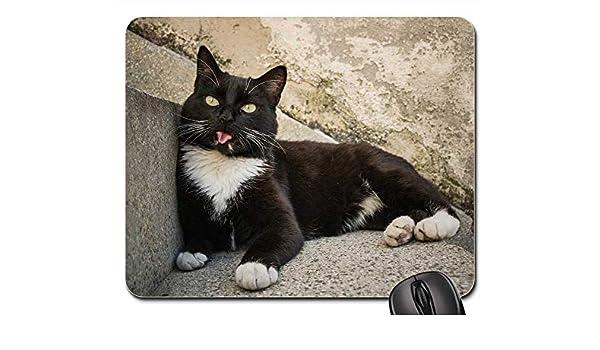 Amazon.com: Mouse Pads - Gato Cat Animal Kitty Cute Feline ...