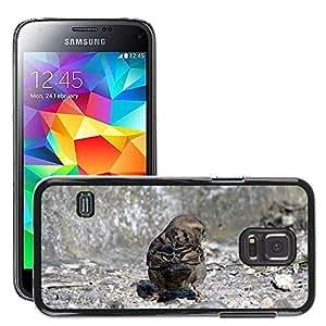 Etui Housse Coque de Protection Cover Rigide pour // M00308108 Aves El Gorrión Naturaleza Fauna // Samsung Galaxy S5 MINI SM-G800