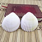 K&C Scallop 10 Pcs
