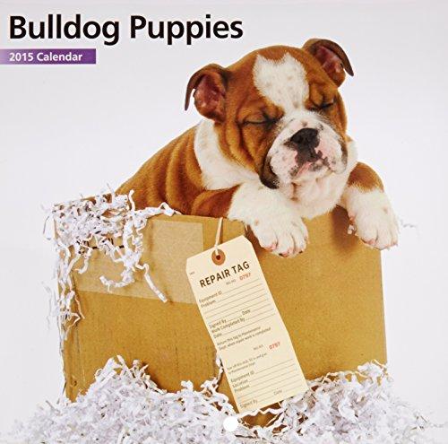 2015 calendars bulldog - 6