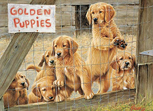 (Golden Puppies )