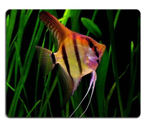 animal-fish-angelfish-freshwater-flat-stripes-wildlife-mouse-pads-customized-made-to-order-support-r
