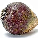 300 Purple Top Rutabaga Seeds