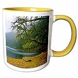 3dRose Sandy Mertens Washington State - Mossy Tree and Lake Crescent in Fairholm - Olympic National Park - 15oz Two-Tone Yellow Mug (mug_156431_13)