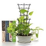 GREENWISH Plastic Mini Superimposed Garden Plant