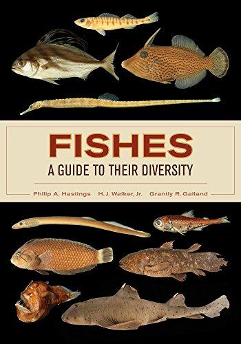 fish guide - 5
