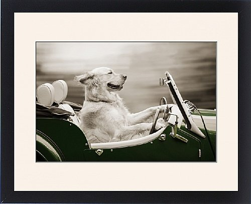 Framed Print of DOG - Golden retriever in car by Prints Prints Prints