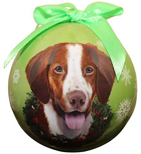 Brittany Spaniel Picture (