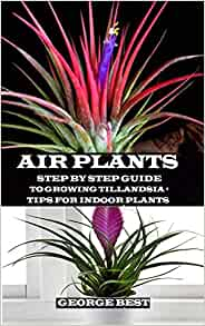 Air Plant Step By Step Guide To Growing Tillandsia Tips For