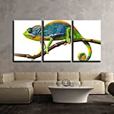 """wall26 - 3 Piece Canvas Wall Art - chameleon - Modern Home Decor Stretched and Framed Ready to Hang - 24""""x36""""x3 Panels"""