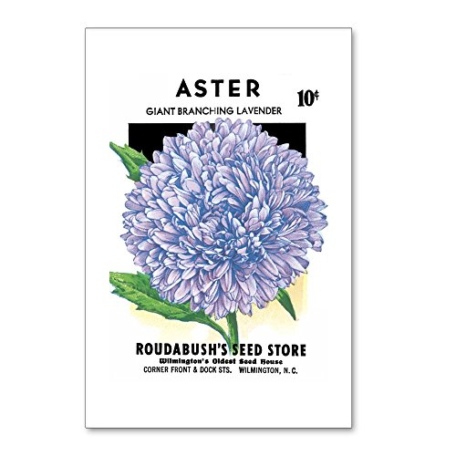 CafePress - Aster - Postcards (Package of 8), 6
