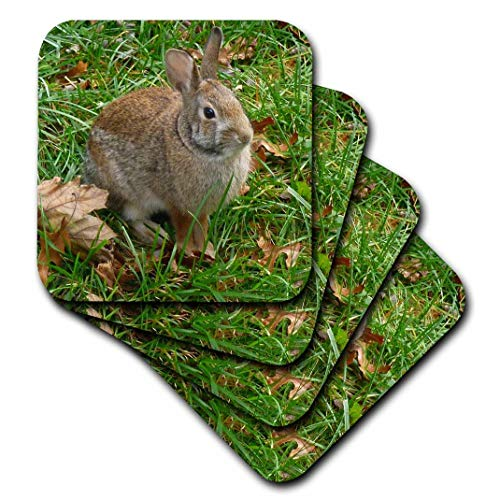 - 3dRose Bunny Rabbit in Autumn - Ceramic Tile Coasters, Set of 4 (CST_97867_3)