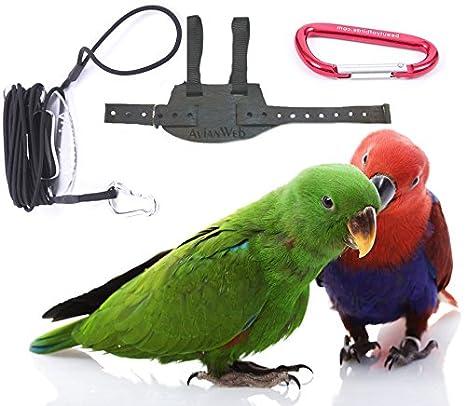 51vbI4%2BAfQL._SX466_ amazon com avianweb ez rider bird harness with 8 ft leash