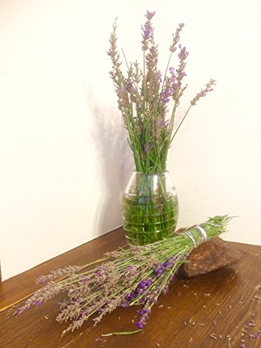 Dried Organic High Desert Lavender Flowers, Hand Picked Bunches of 150+ Stems with Buds 10-12