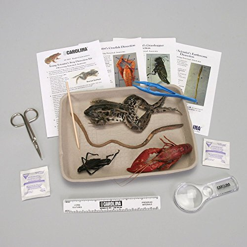 Young Scientist's Animal Dissection Kit by Carolina Biological Supply Company