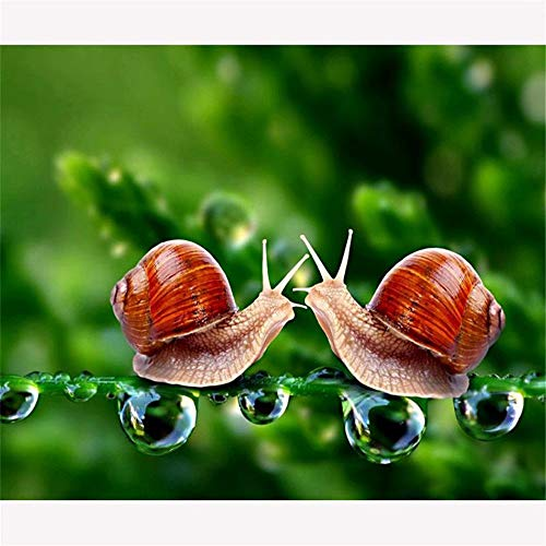 (Full Drill 5D Diamond DIY Painting Craft Kit Home Wall Hanging Decor -Snail Couple Love)