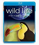 Cover Image for 'Wild Life'
