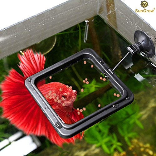 51vcKCbYPTL - Betta Feeding Ring - Reduces Wastage & Maintains Water Quality - Practical Floating Food Square held by Secure Suction Cup - Suitable for Flakes & other Floating Fish Foods