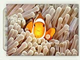 Minicoso Flannel Throw Blanket Ocean Clown Fish Swimming In Tentacles In The Pacific Ocean Bali Indonesia Marine Wildlife Beige Orange Autumn Winter Warm Double Sides Print Blanketry, 79'' W x 59'' H