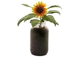 Back to the Roots Organic Sunflower Windowsill Planter