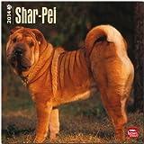 Shar-Pei Calendar (Multilingual Edition)