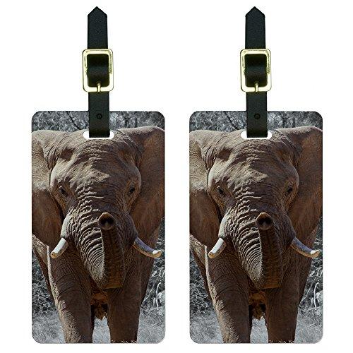 Africa African Elephant Luggage Suitcase