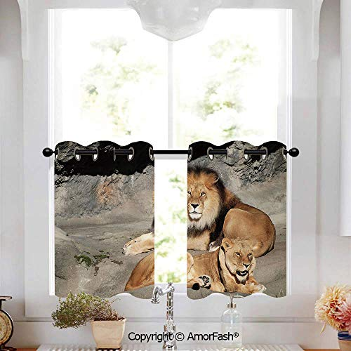 Zoo Kitchen Curtains,Modern Geometric Design Print, Window Drapes for Kitchen Cafe,W52 x L18-Inch,Male and Female Lions Basking in The Sun Wild Cats Habitat King of Jungle ()