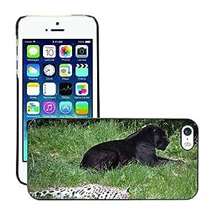Etui Housse Coque de Protection Cover Rigide pour // M00135089 Panter leopardo Animales // Apple iPhone 5 5S 5G