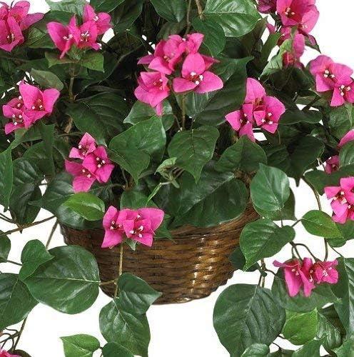 Bougainvillea Hanging Basket Silk Plant 24in