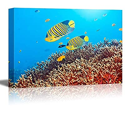 Canvas Prints Wall Art - Underwater Landscape with Couple of Royal Angelfishes | Modern Wall Decor/Home Art Gallery Wraps Giclee Print & Wood Framed. Ready to Hang - 32