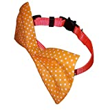 Bemix Pets ⚡ Cat Collar with Bowtie and