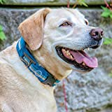 Kurgo Extra Wide Comfort Collar for Dogs | Molle
