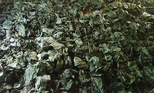 Alchornea Cordifolia - Dry Leaves 8 oz by Generic (Image #2)