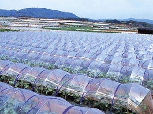 農ポリ 厚さ0.1mmX幅180cmX長さ100m B00KCIEW1I