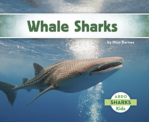 Whale Sharks