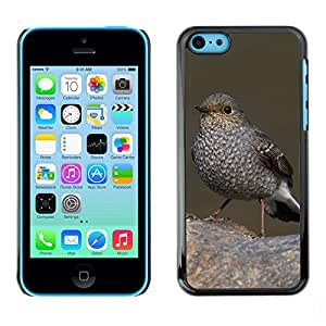 Print Motif Coque de protection Case Cover // F00002164 animales al aire libre // Apple iPhone 5C