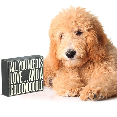 JennyGems Wood Box Sign All You Need Is Love And A Goldendoodle - Goldendoodle Gift Series, Goldendoodle Moms and Owners