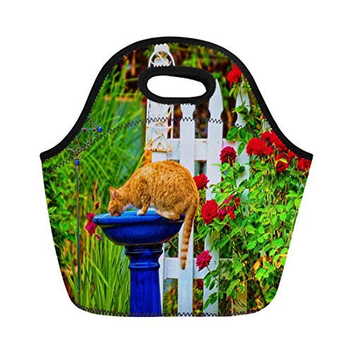 (Semtomn Lunch Bags Orange Tabby Cat Drinking Out of the Bird Bath Neoprene Lunch Bag Lunchbox Tote Bag Portable Picnic Bag Cooler)