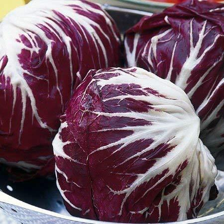 Seekay Radicchio  Palla Rossa 3 M/ínimo 450 Semillas 450 seeds