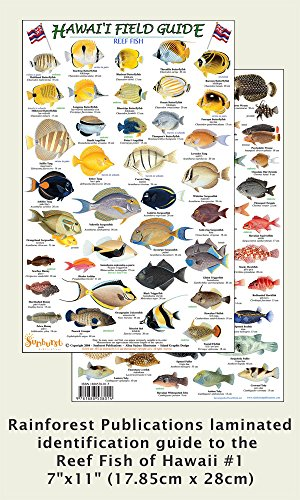 Fish Identification Guide (Hawaii Reef Fish #1 Identification Guide (Laminated Single Sheet Field Guide) (Hawaii Field Guides) (v.)