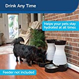 PetSafe Healthy Pet Water Station, Dog and Cat