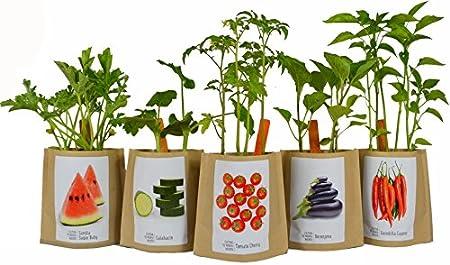 Kit de cultivo huerto urbano FRESONES: Amazon.es: Jardín
