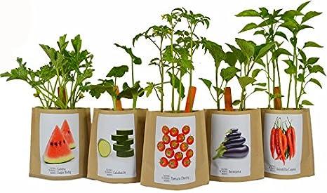 Kit de cultivo huerto urbano GUISANTES: Amazon.es: Jardín