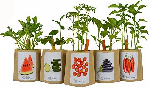 Kit de cultivo Huerto Urbano BERENJENA: Amazon.es: Jardín
