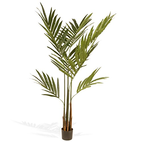National Tree 5.8 Foot Kentia Palm Potted Tree (Kentia Palm Tree)