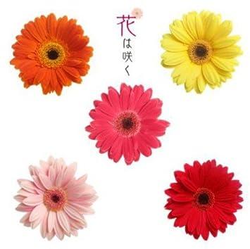 Amazon   花は咲く   NHK交響楽...