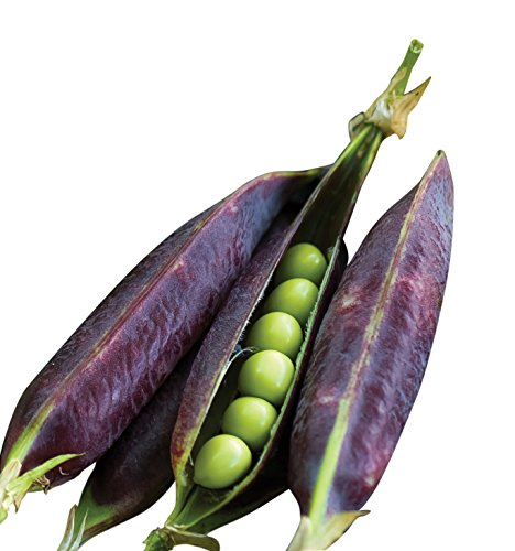 Burpee Purple Podded Pea Seeds  200 seeds
