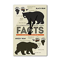 Lantern Press Yellowstone National Park, Wyoming - Facts About Bears - Grizzly and Black Bear (Acrylic Wall Clock)